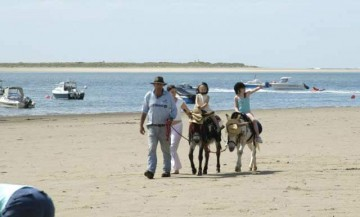 carmarthen beach donkey rides